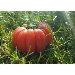 В тепличных комплексах России собрано более миллиона тонн овощей