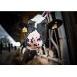 Минсельхоз РФ контролирует бесперебойную работу предприятий животноводства и переработки