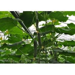 На Дальнем Востоке России к 2025 году производство тепличных овощей возрастёт до 56 тыс. тонн