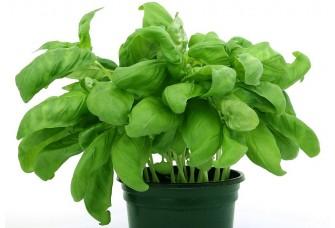 Эффективно и прибыльно. Выращивание растений в вертикальных фермах